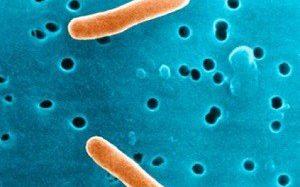 Что такое бактерии