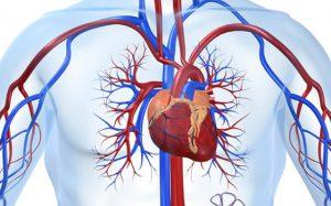 Специалисты нашли способ, снижающий вероятность появления болезней сердца