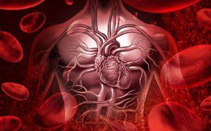 Проблемы с сердцем можно вычислить по внешности