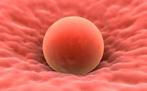 Чистка крови народными средствами