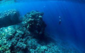 Новое «месторождение» антибиотиков обнаружено в океане