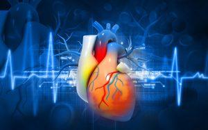 Напечатано первое в мире трехмерное полноценное сердце