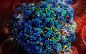 Новая система расскажет, как проходит процесс регенерации тканей