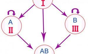 Открыты взаимосвязи между группой крови и заболеваниями