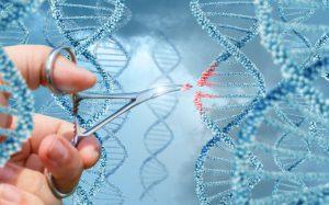Новый метод редактирования ДНК безопаснее CRISPR