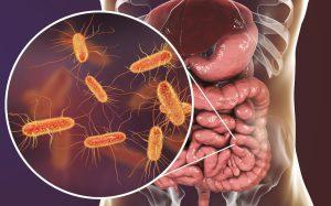 Дисбактериоз кишечника под прицелом, или Что такое война бактерий?